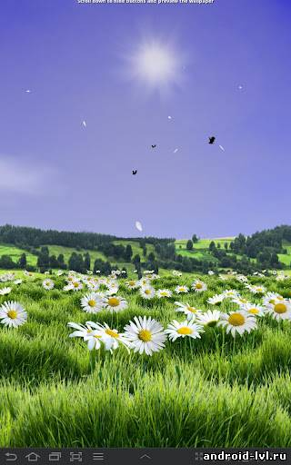 Первый скриншот Lovely Daisies Live Wallpaper